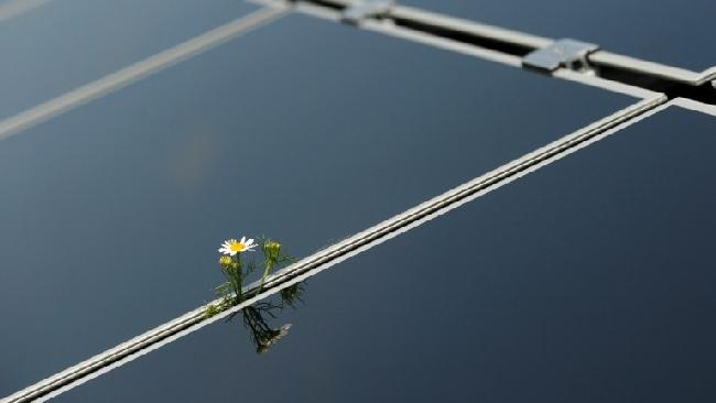 I pannelli solari del futuro? Ispirati alle piante per conservare energia più a lungo