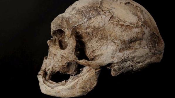 DNA datazione di fossili datazione Dimmi di più su di te