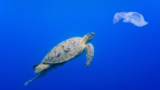 Allarme scienziati: dal 2050 negli oceani più bottiglie di plastica che pesci