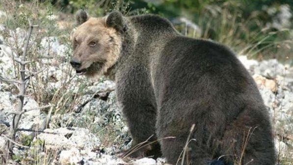 Tutti hanno paura dell'orso M49, sentieri deserti e niente pic-nic