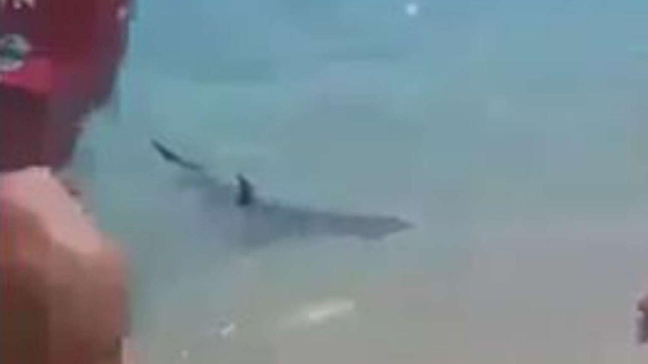 calabria, squalo a pochi passi dalla riva: paura tra i bagnanti - tgcom24