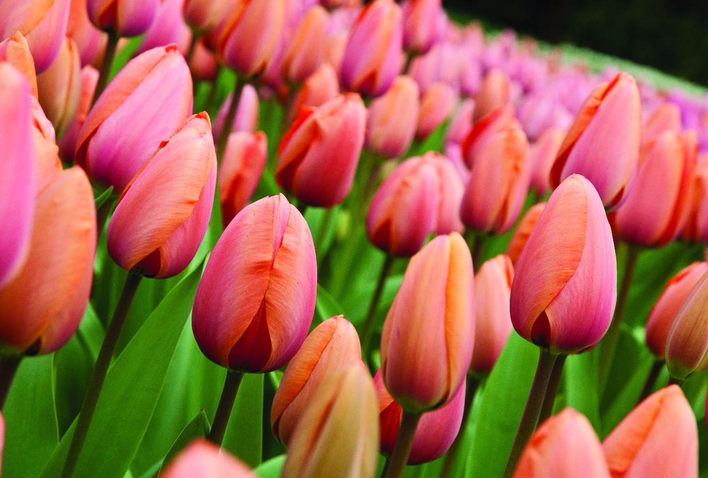 Balcone i primi fiori per salutare la primavera tgcom