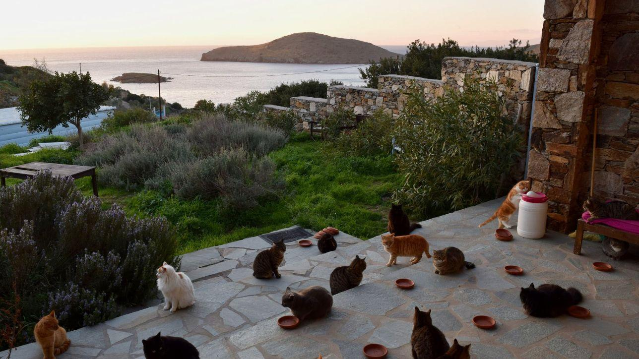 Grecia Cercasi Accarezzatore Di Gatti Si Offre Stipendio E