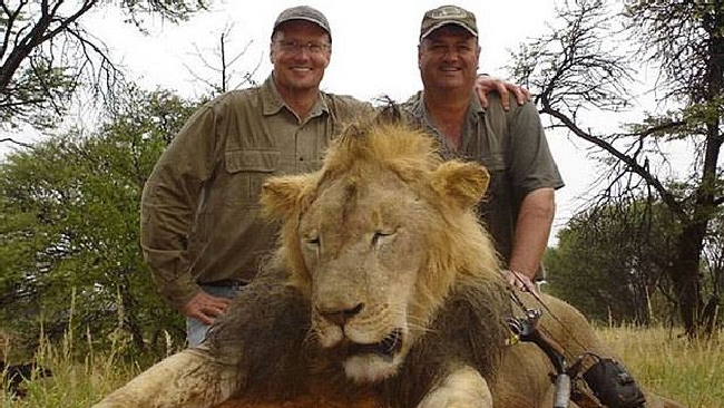 Scoperto il killer del leone Cecil: è un dentista americano, ora è ricercato