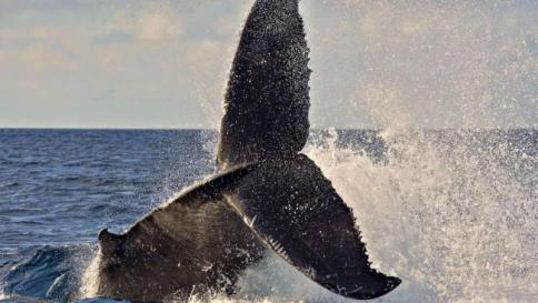 Super-Amici, in esso il sovrano di Atlantide a parte qualche balena e qualche cavalluccio marino gigante come.