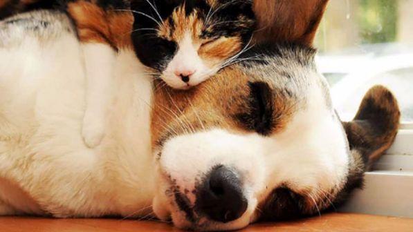Cosa Sognano Cani E Gatti Ecco La Risposta Degli Scienziati Di