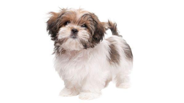 Usa, un cane (sano) è stato soppresso per essere sepolto con la padrona: è polemica