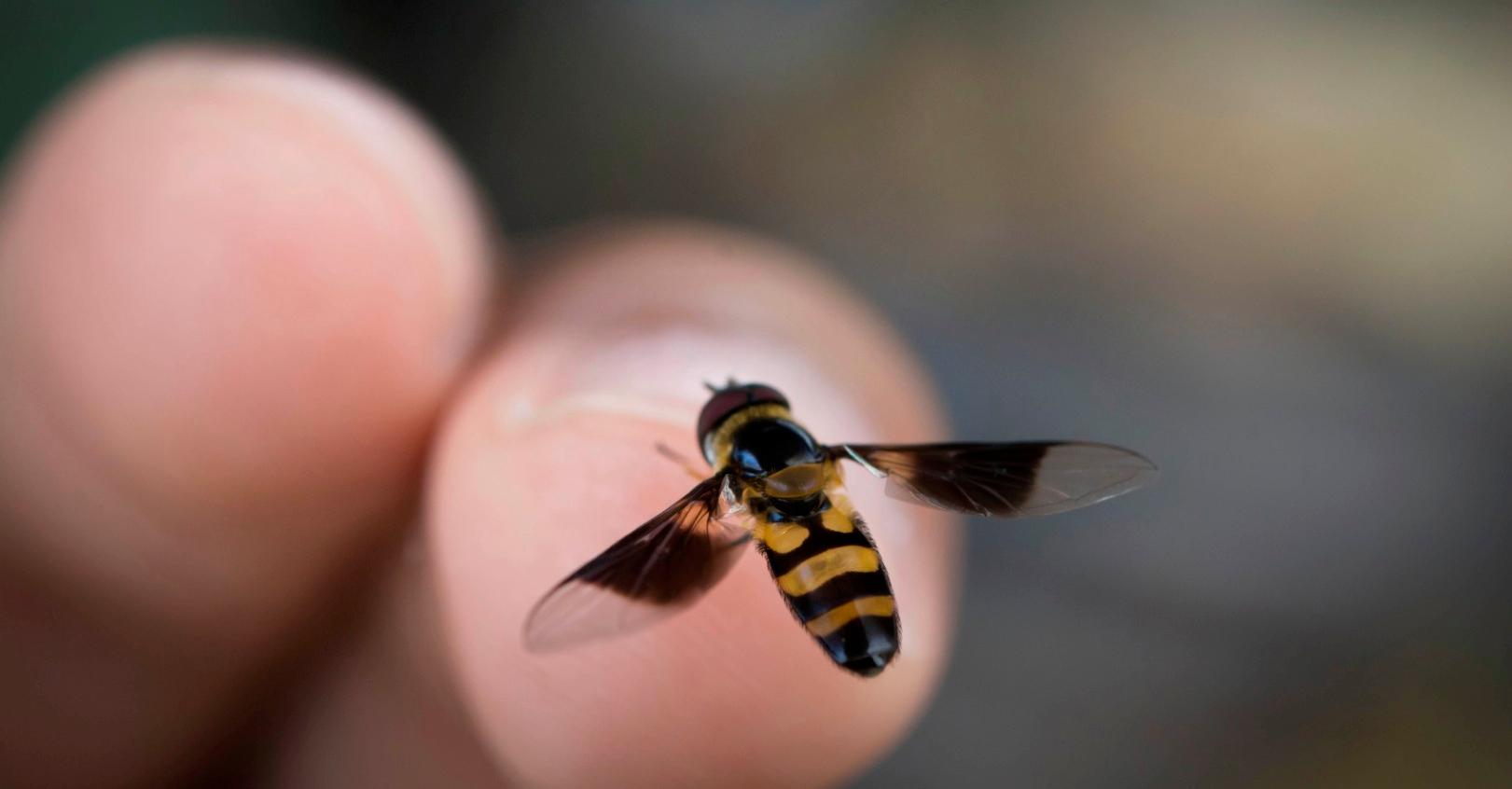 puntura ape