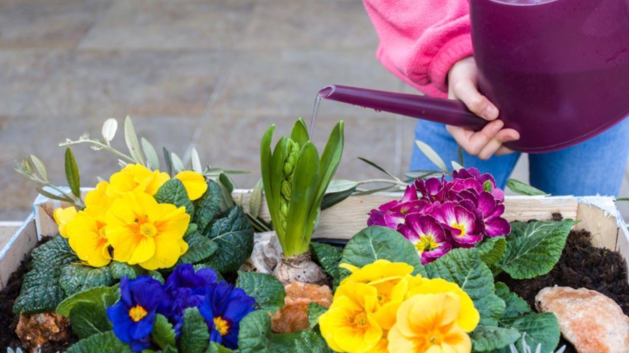 Composizione Vasi Da Balcone saluta la primavera: ecco i fiori da tenere sul balcone di