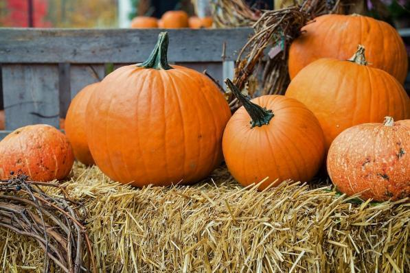 Immagine Zucca Di Halloween 94.Zucca I Suoi Benefici Oltre La Lanterna Di Halloween Tgcom24