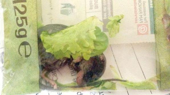 Genova, coppia trova topo all'interno della busta dell'insalata