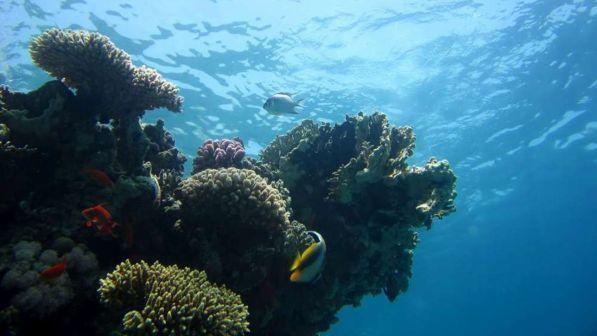 """Clima, dossier Onu: """"Gli oceani sono sempre più caldi, danni in aumento"""""""