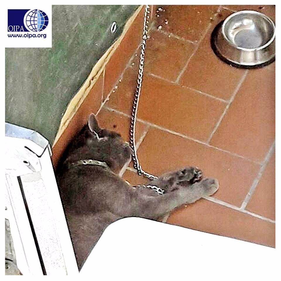 Rete Per Gatti Condominio reggio calabria, gatto tenuto incatenato sul balcone