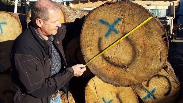 """Val di Fiemme, """"regaliamo gli alberi della musica per salvare gli Stradivari"""""""