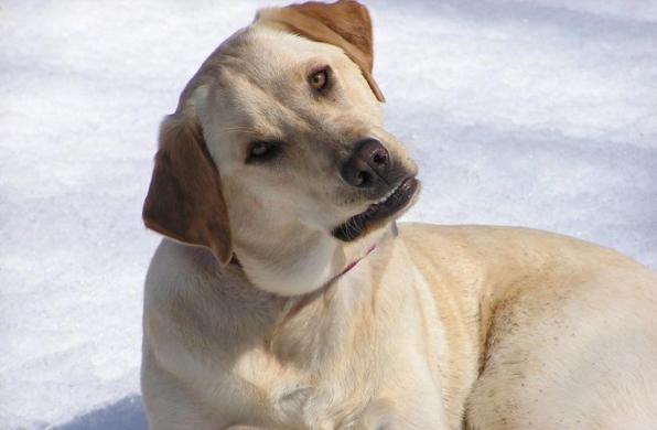 I Cani Ci Capiscono Lo Dimostra Una Ricerca Scientifica Tgcom24