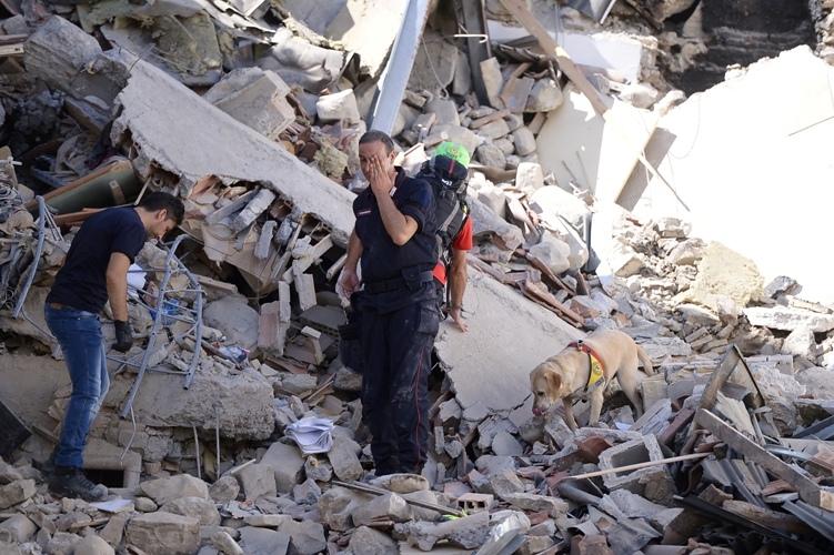 Terremoto, i cani-eroi che salvano vite umane