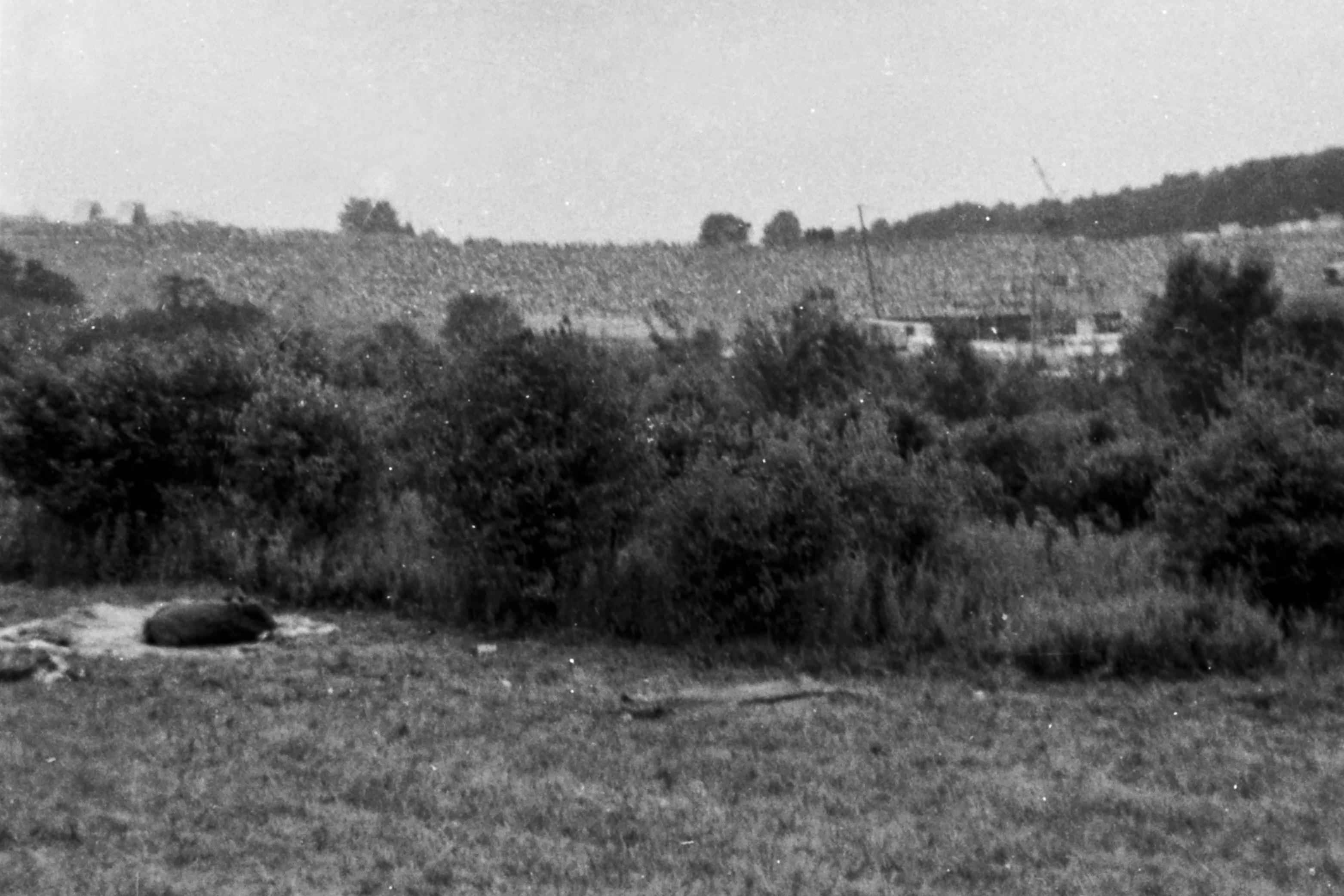 Woodstock, 50 anni fa la tre giorni di pace e musica: guarda le foto