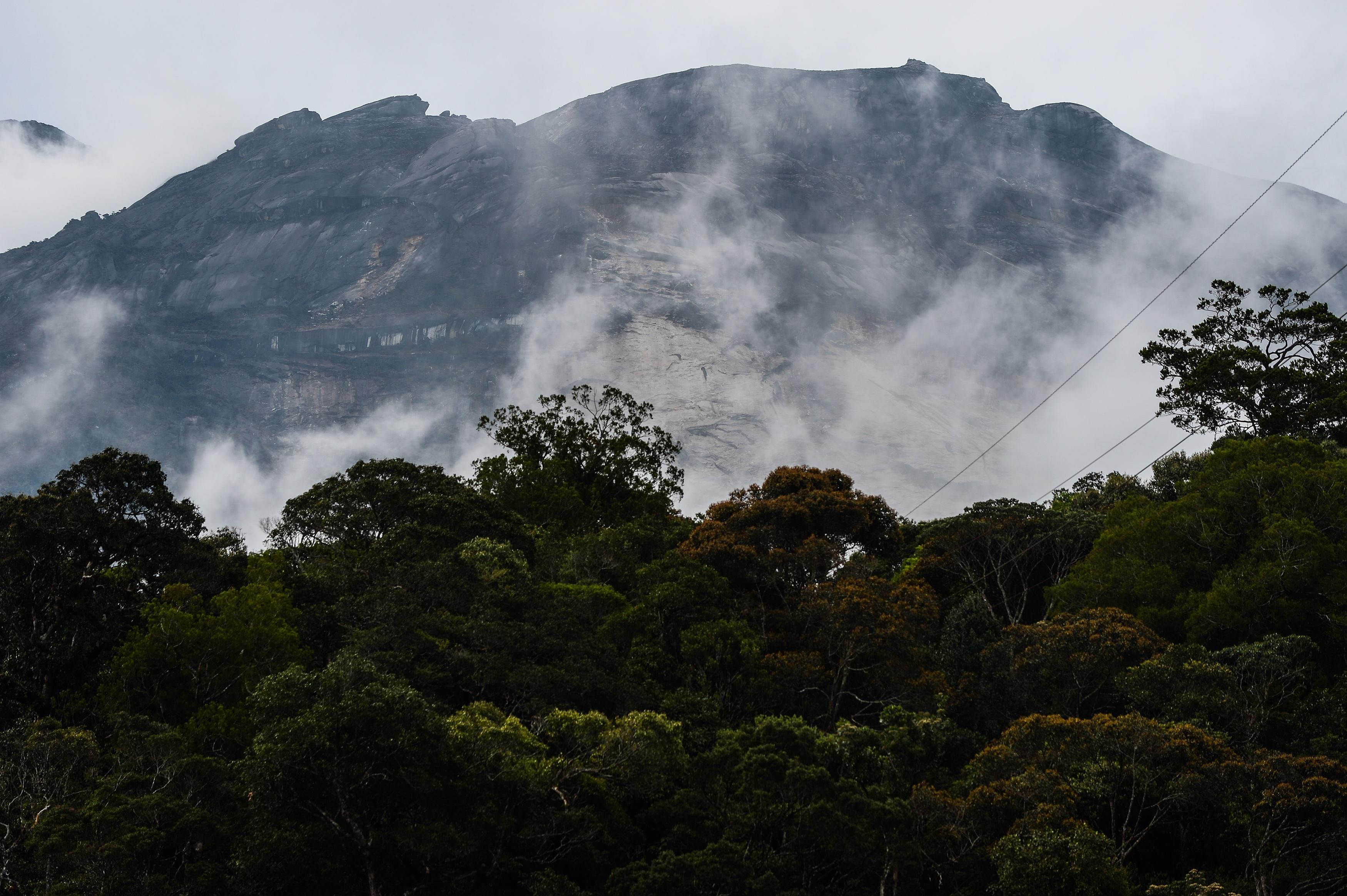Ecco le 10 foreste più grandi al mondo