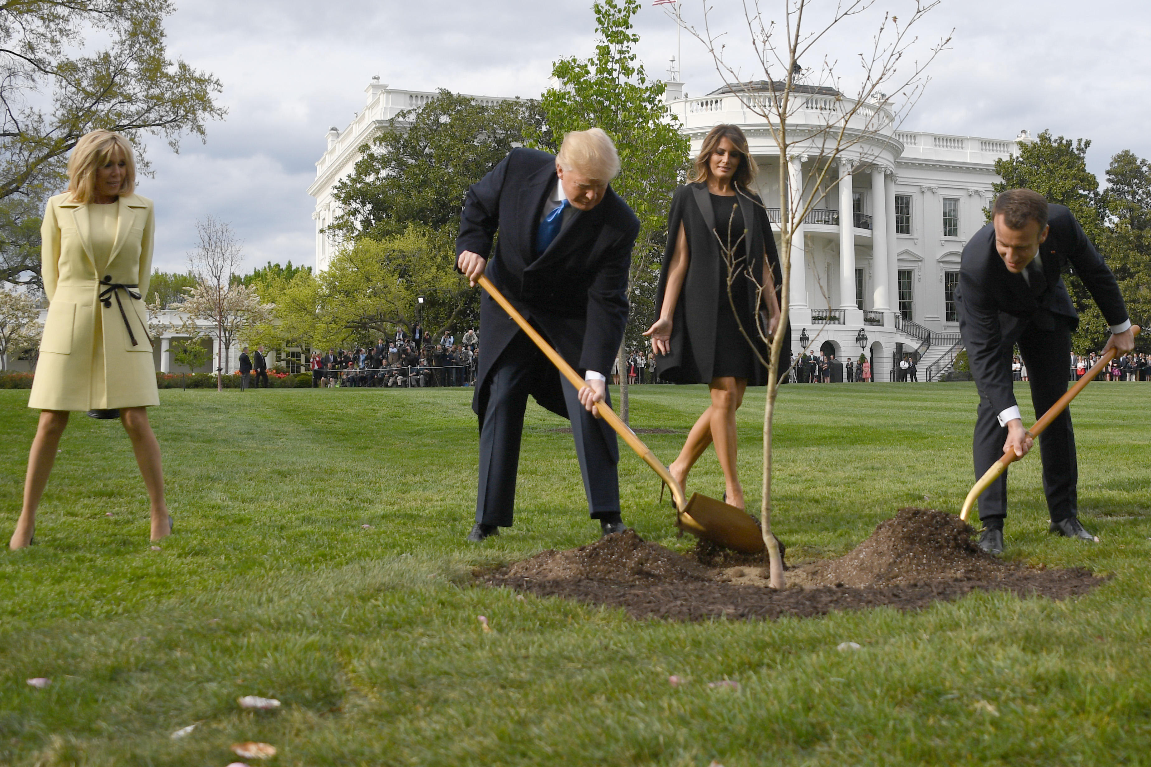 È morto l'albero simbolo dell'amicizia tra Trump e Macron