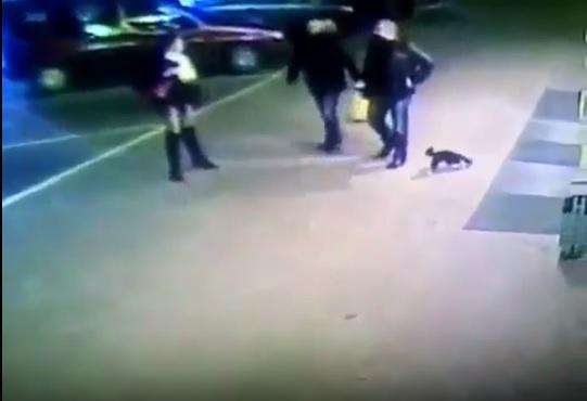 Bielorussia, ufficiale prende a calci un gatto: incastrato dalle telecamere viene espulso dalla polizia