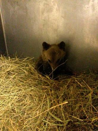 La breve vita dell orsetta Morena