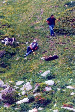 Breno, uccidono cane a bastonate: assolti anche in appello padre e figlio allevatori