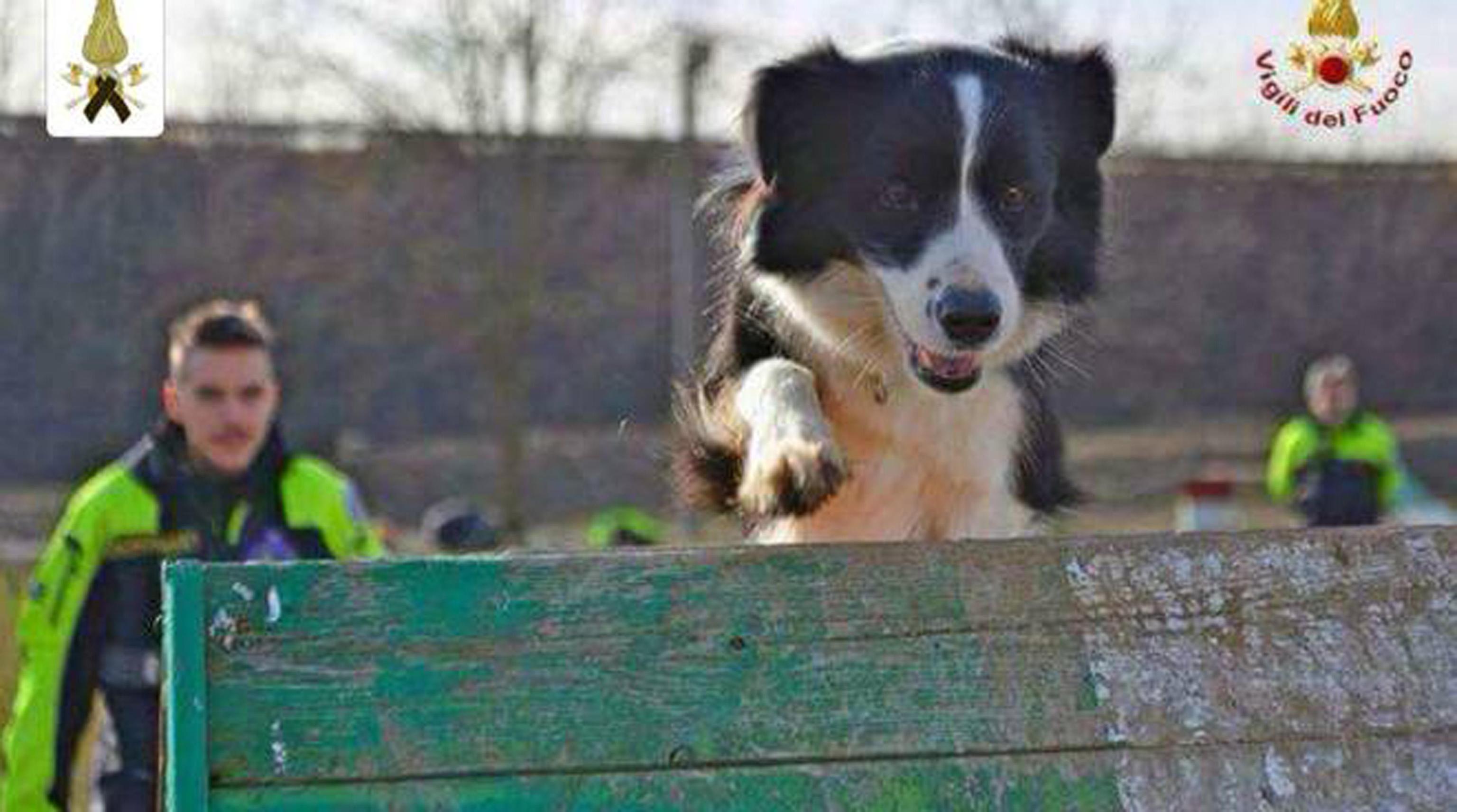 Savona, morta Camilla: cane eroe di Amatrice