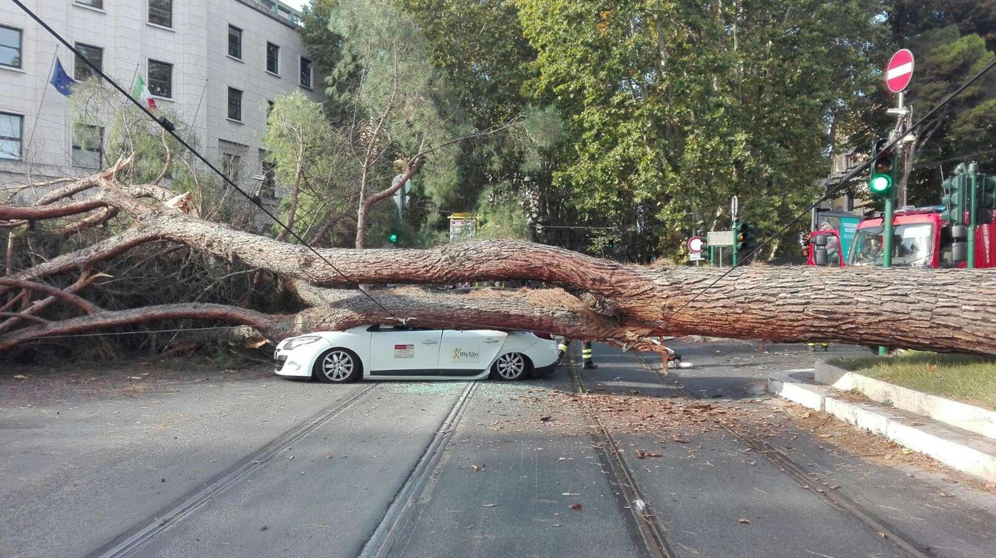 Roma, albero si schianta su auto: vivi per miracolo