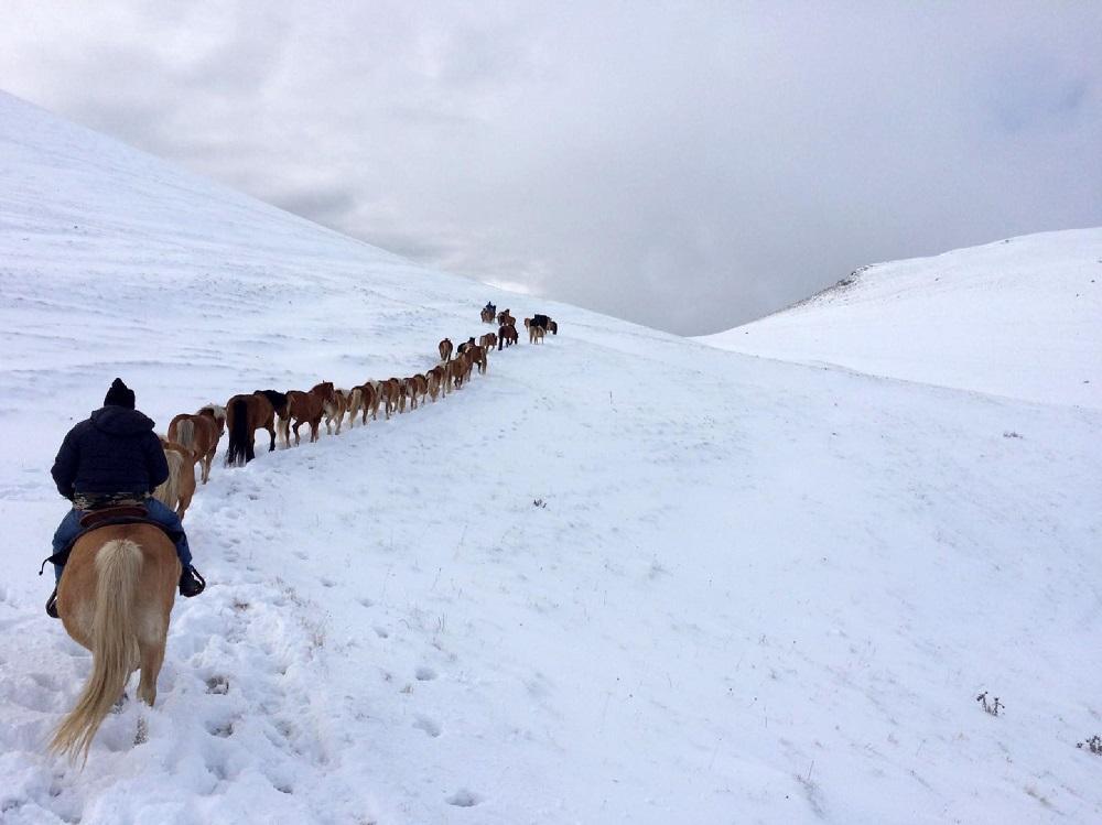 Da Castelluccio a Norcia, sotto la bufera si ripete la transumanza dei cavalli