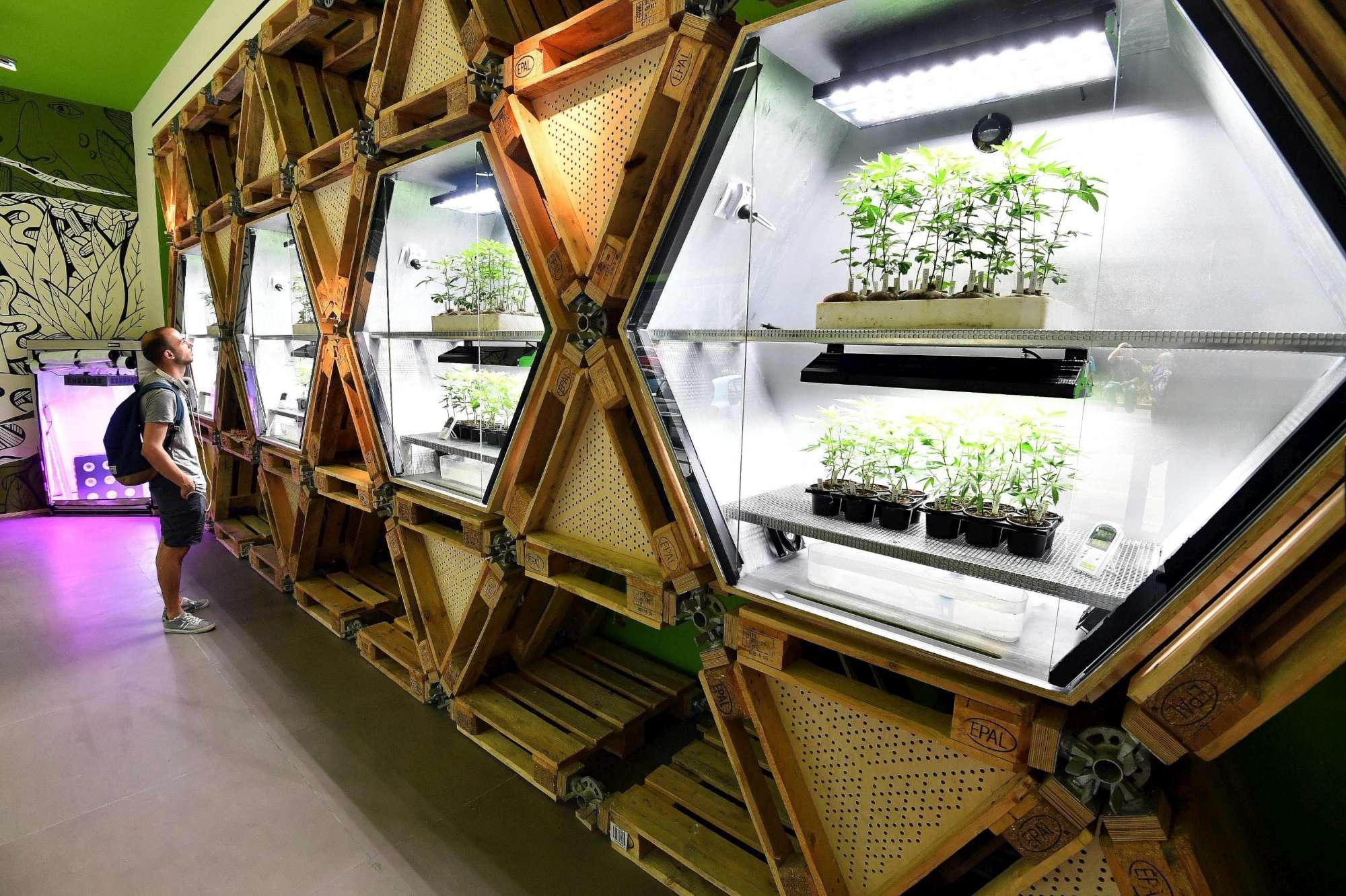 Milano, aperto il primo negozio che vende cannabis