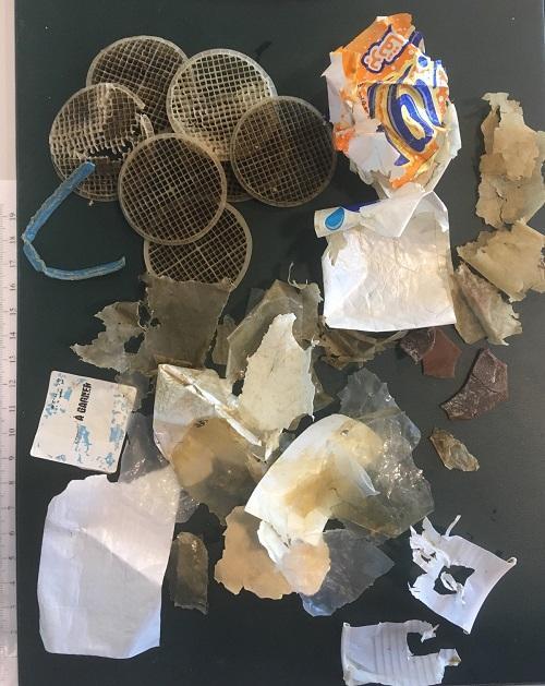 Filtri, buste, bicchieri: nella pancia di una tartaruga marina la discarica della plastica