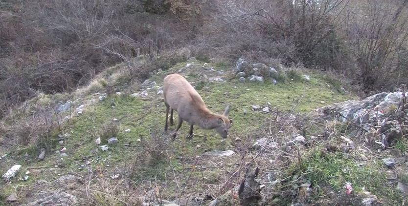 Che fine ha fatto il cervo Boris?