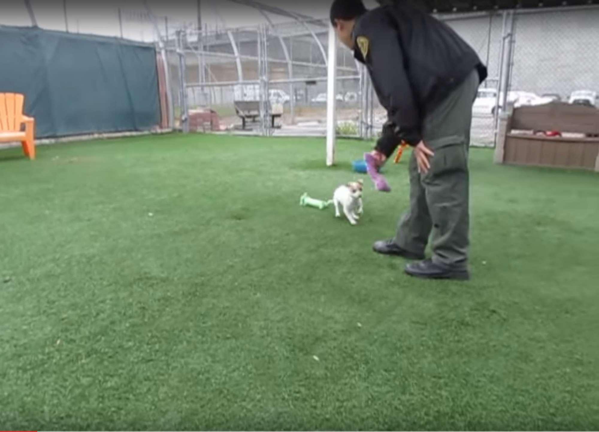 La rinascita di Bubba, il cane tossicodipendente