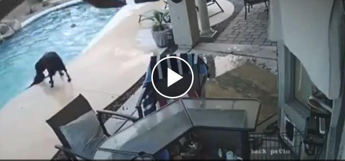 Arizona, un eroe a quattro zampe salva l amico che stava affogando