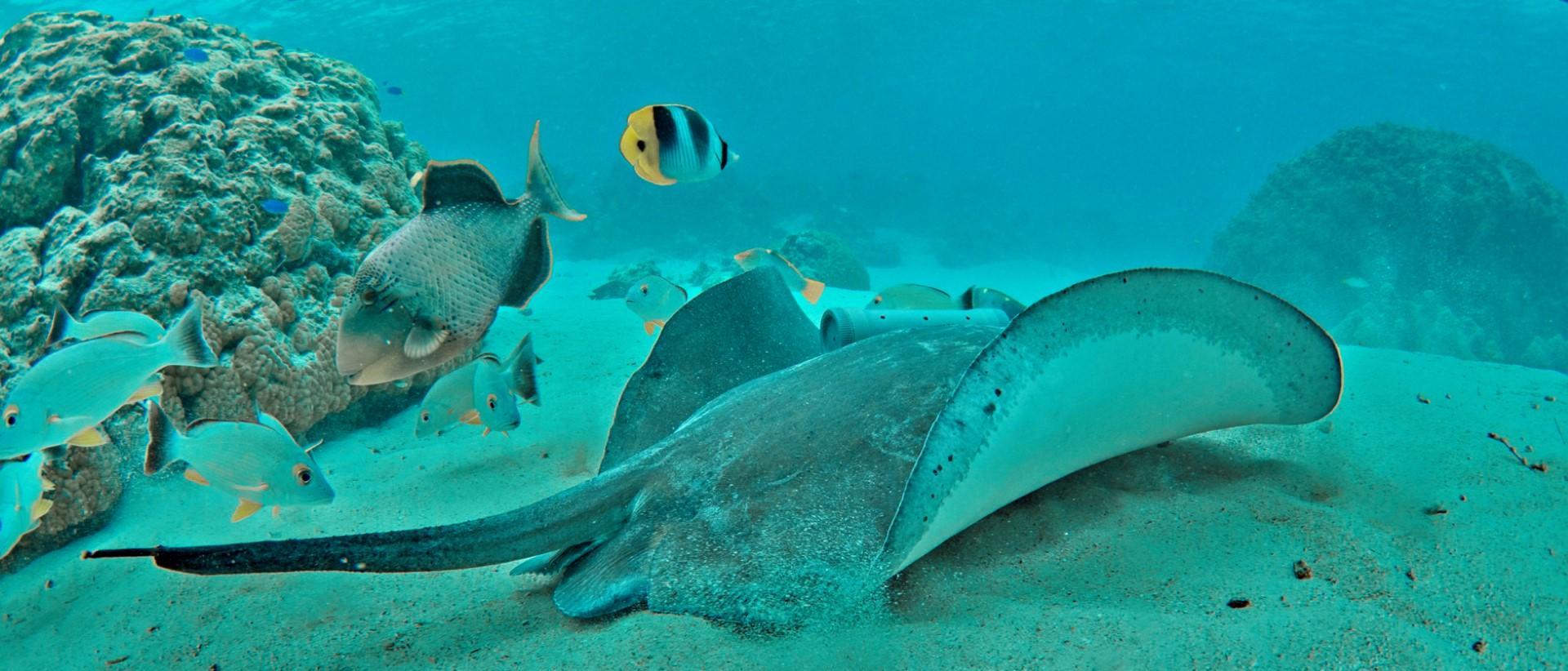 La Polinesia e il trekking sottomarino