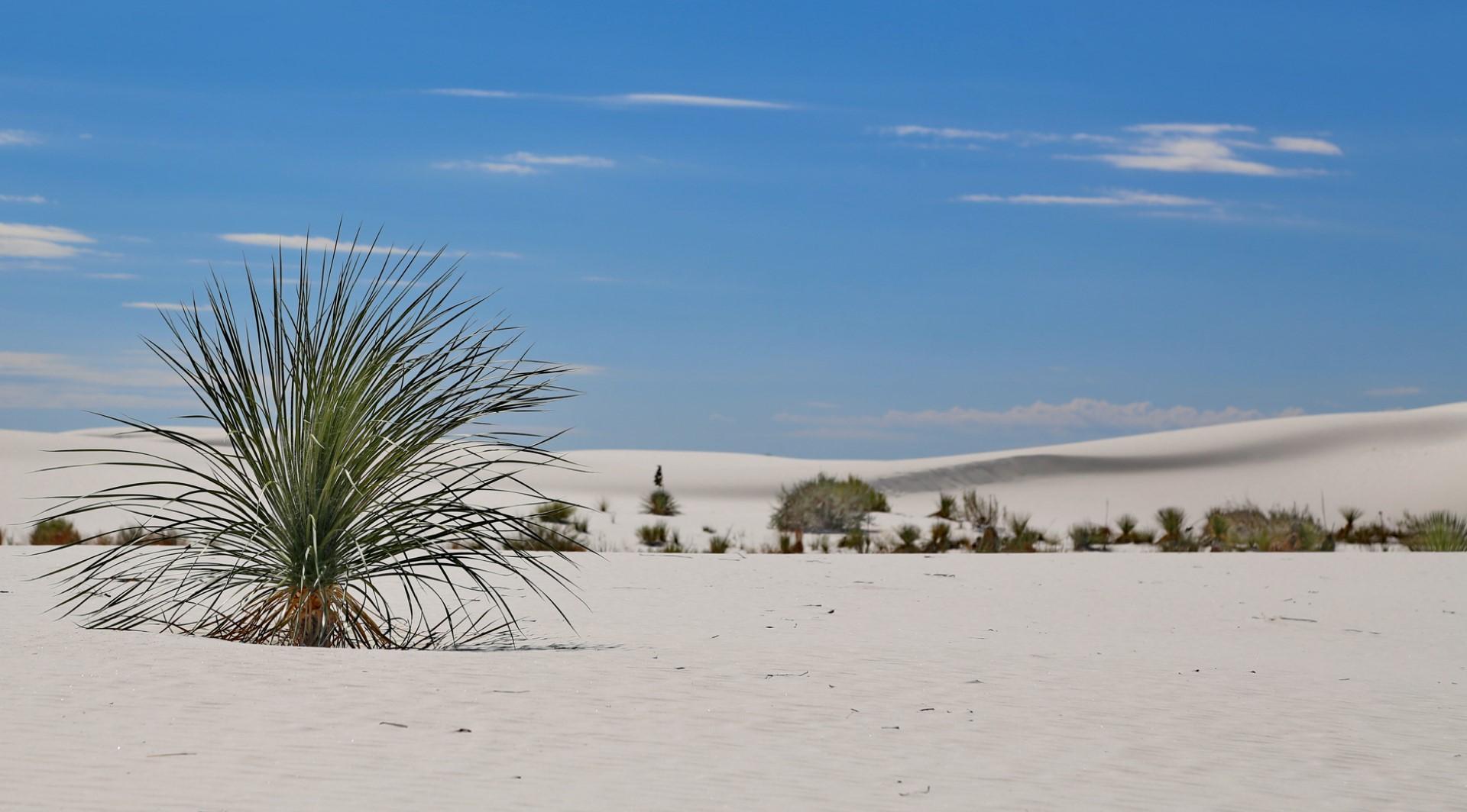 Il deserto White Sands e le sue dune bianche