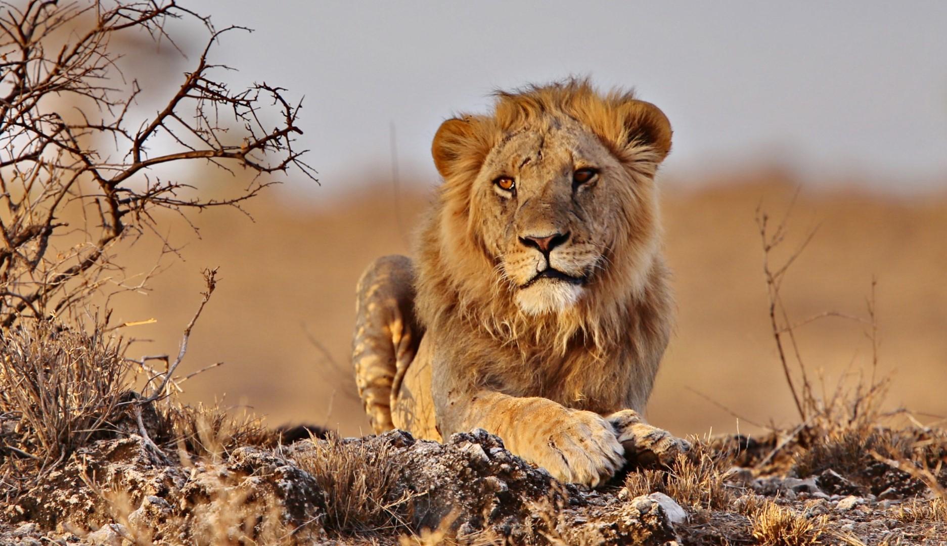 Incontri Kenya