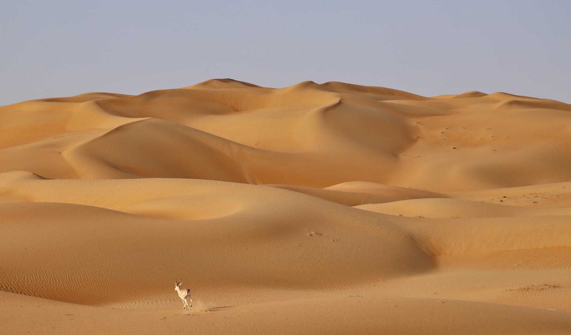 """Abu Dhabi """"Wild"""": tra deserto e riserve naturali"""