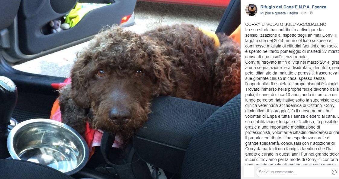 Faenza piange Corry, il cane coraggio simbolo dell abbandono e della rinascita