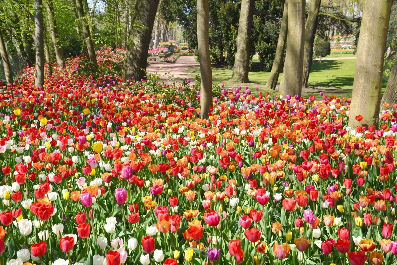 Tappeto Floreale Bruxelles : Un tappeto da mila fiori per bruxelles