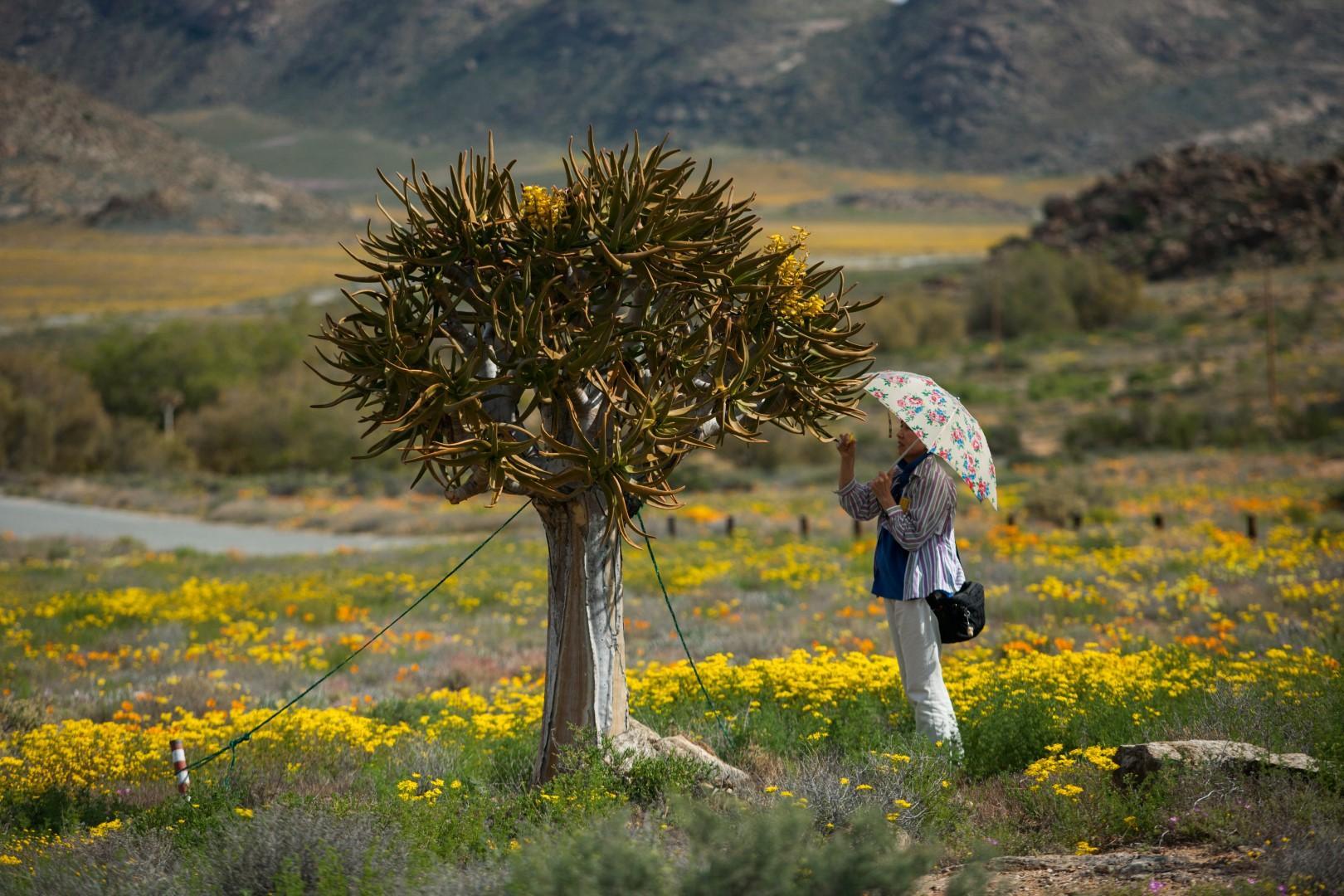 La magia della primavera in Sudafrica