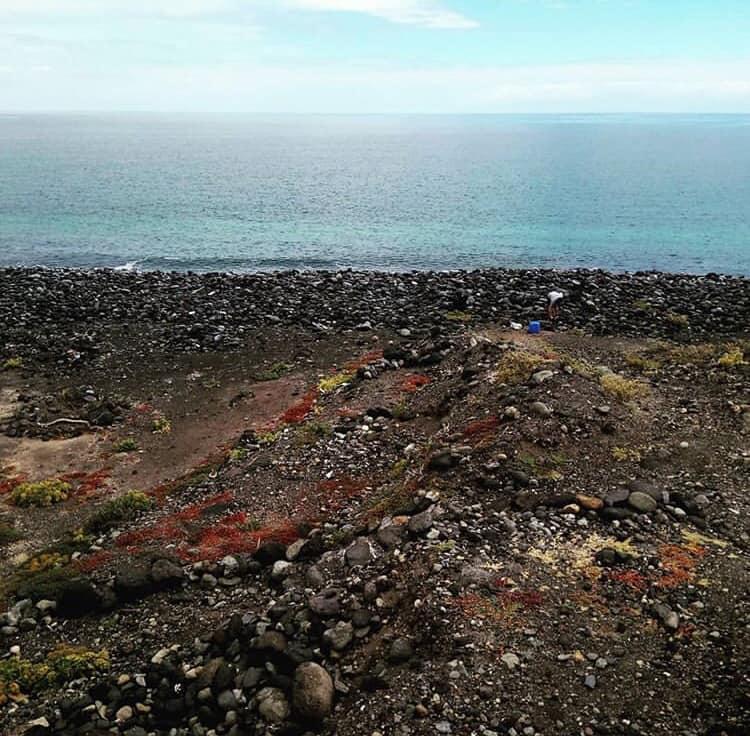 La spiaggia di Tenerife ricoperta di plastica: l allarme degli ambientalisti