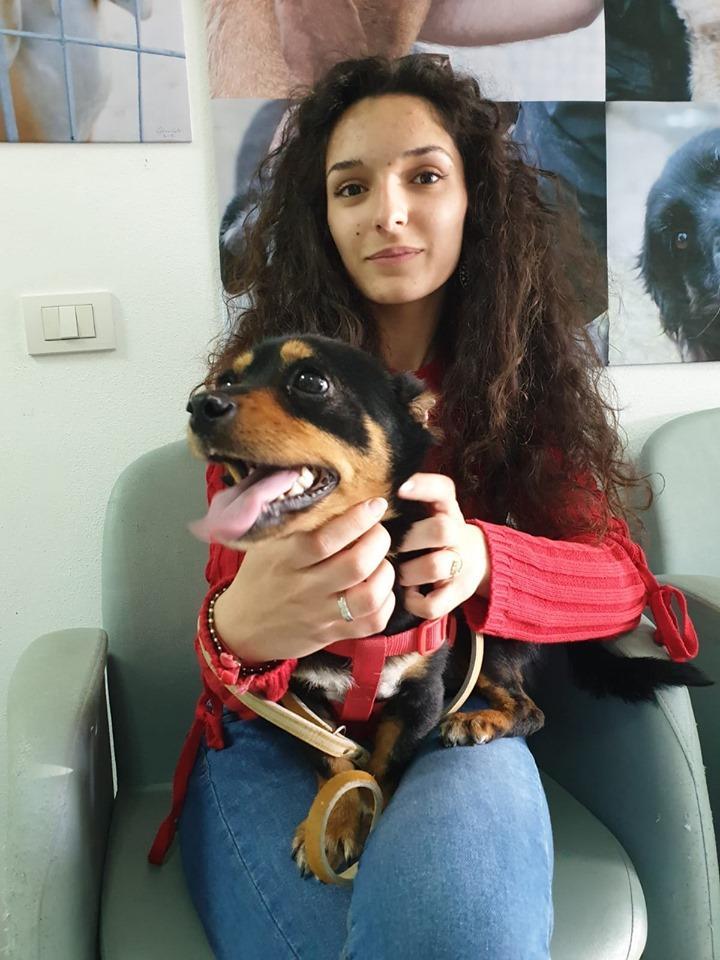 Sassari, il cane Fuego è diventato Fibi e ha trovato casa