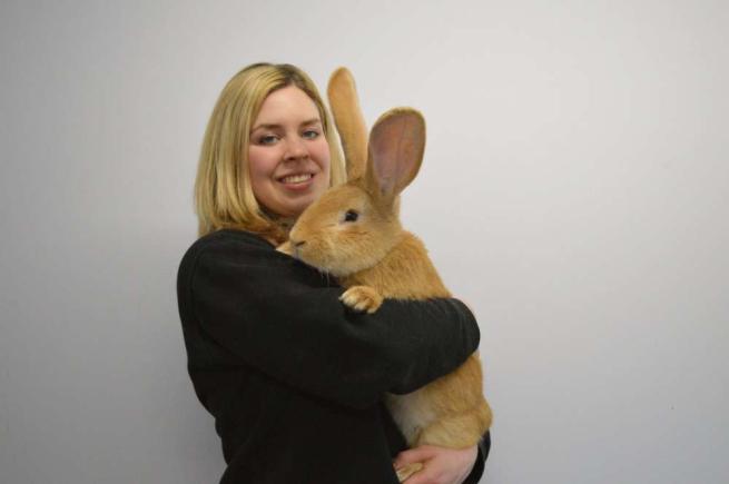 Il coniglio gigante cerca una nuova casa  Atlas è amichevole e curioso