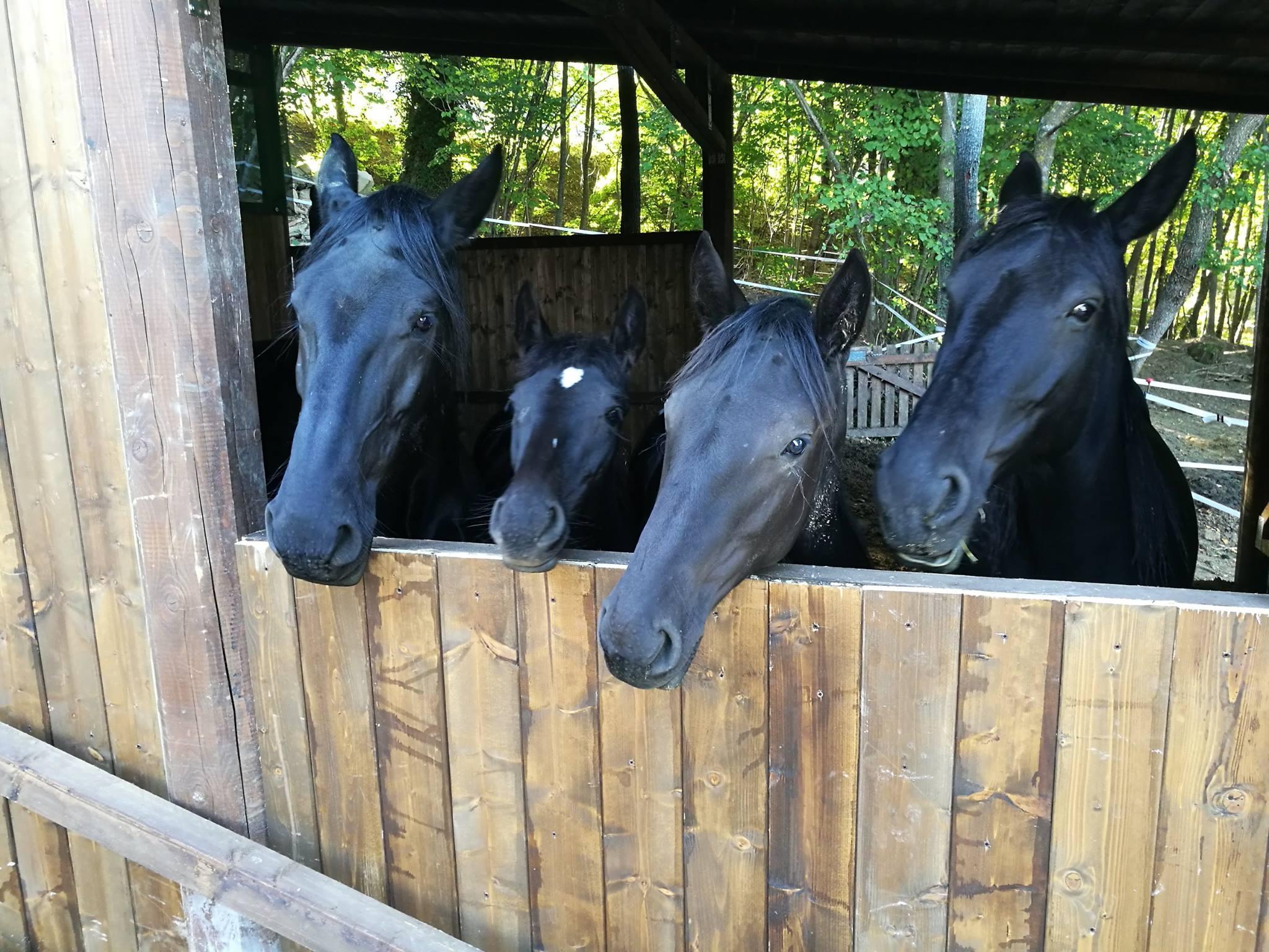 Terremoto, la norma salva-Peppina non risparmia le stalle di Fiastra