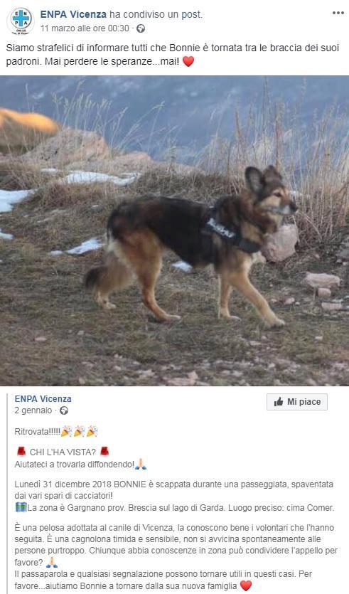 Cane fuggì per i botti di Capodanno: torna a casa due mesi dopo