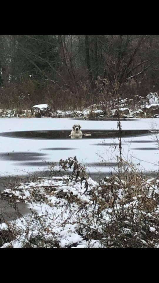 Ohio, in salvo il cane finito nello stagno ghiacciato