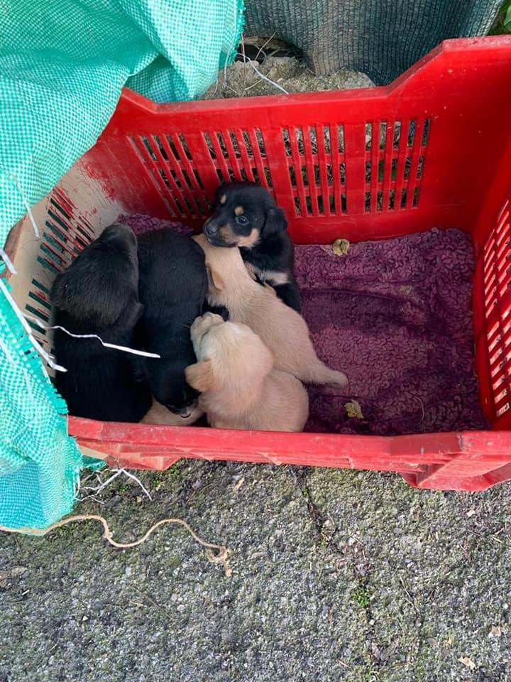 Cuccioli abbandonati davanti al canile di Vasto, Jovanotti li manterrà fino all adozione