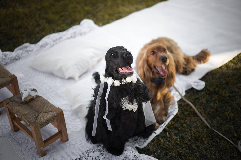 A Treviso anche i cani vanno a nozze: ecco il Sì da favola tra Cesare e Camilla