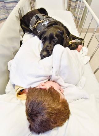 Nuova Zelanda: il bambino autistico e il labrador inseparabili anche in ospedale